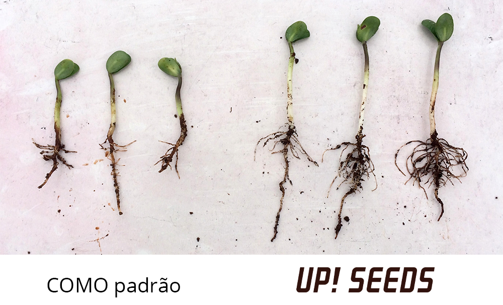 Desenvolvimento inciial da soja com tratamento de sementes