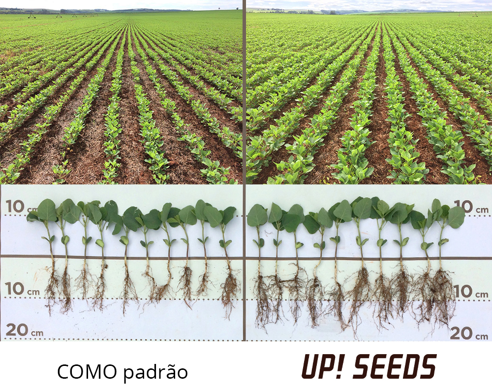 Desenvolvimento da Soja com uso do Up! Seeds