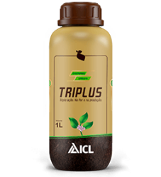 Triplus Anuais