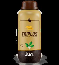 Triplus Perenes